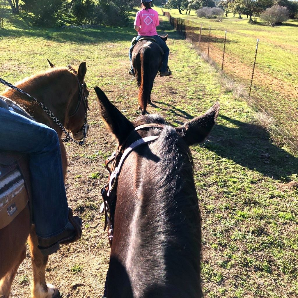 Horseback Riding at Diamond C Stables